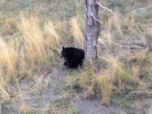 bear-01-18